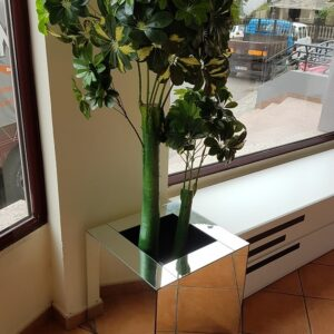 Planta cheflera matizada 04705