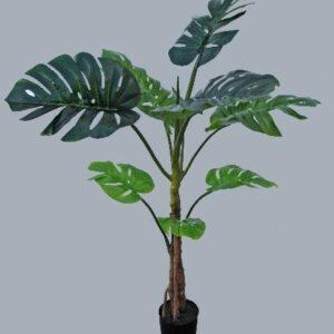 Planta Costela-De-Adão c/130cm