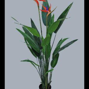 Planta Estrelícia c/130 cm