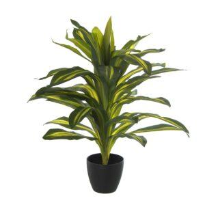 Planta Tronco Brasil